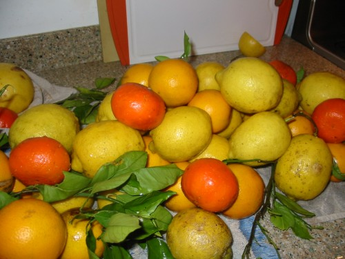 Lots of Citrus!